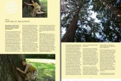 Tree-of-Life-Ava-Weis-Buch-Digital_Seite_06