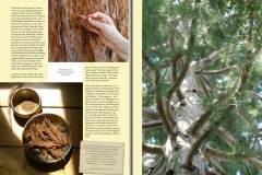Tree-of-Life-Ava-Weis-Buch-Digital_Seite_07